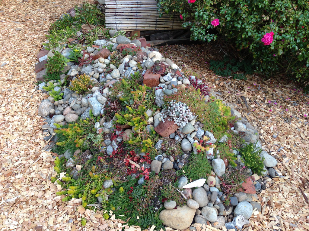 succulent rock garden this is probably going to have to go flickr. Black Bedroom Furniture Sets. Home Design Ideas