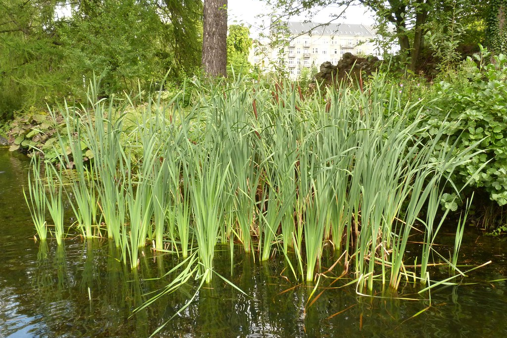 Image Result For River And Reeds