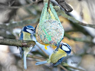 balls-n-tits | by johnb/Derbys/UK