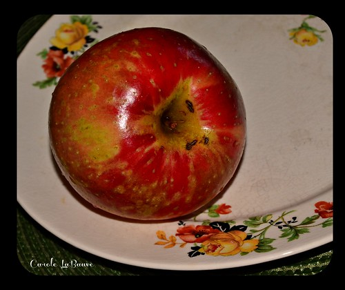 Plated Apple | by caroles_corner