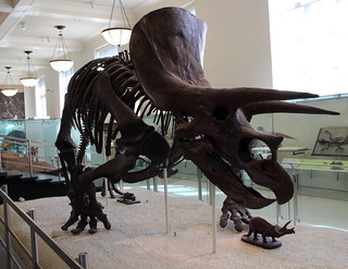 Triceratops | by harve64