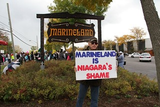 Ric O'Barry's view of Marineland | by Aquarian0265