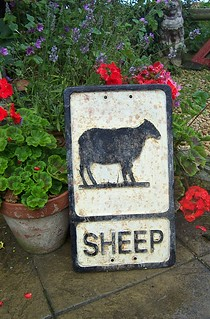 Sheep old cast rd sign | by 40019 Caronia