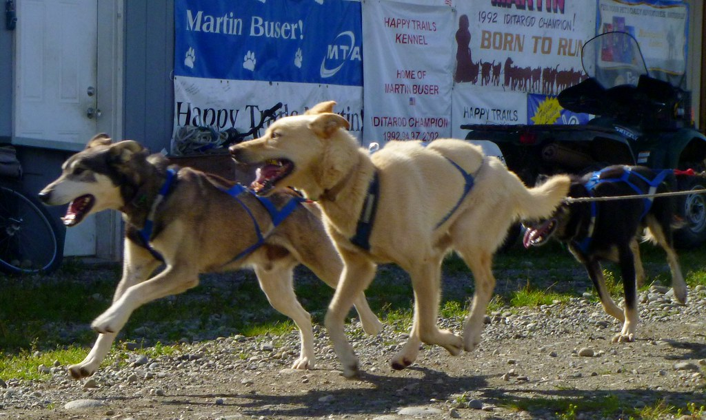 Dog Kennels Near Busch Gardens Williamsburg