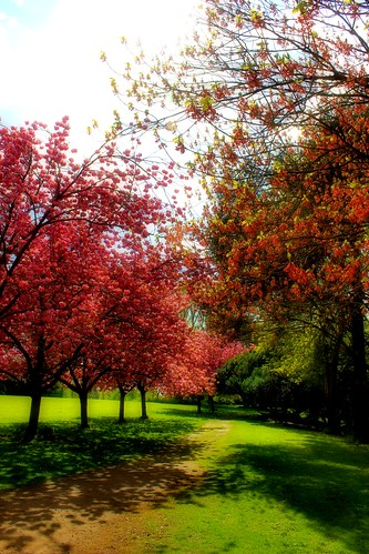 Spring In Syon House Gardens 1 - Brentford London | by Simon & His Camera
