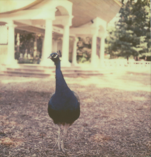 Untitled | by Sarah Kirkham