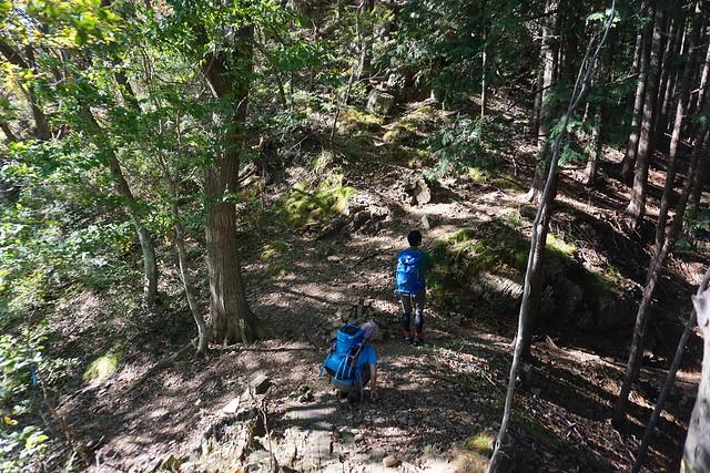 古賀志山 樹林帯