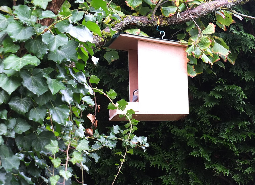 Drole d 39 ecureuil environ deux heures apr s l for Combattre les moustiques dans le jardin