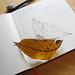 Leaf and Sketch_1