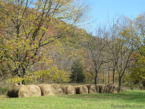 (24-3) This was our first year putting up round bales of hay. We didn't get many, but it's better than none - FarmgirlFare.com | by Farmgirl Susan