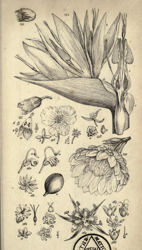 N294 w1150 a grammar of botany london longman 1821 for Botanical tattoo london