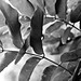 BW Leaves