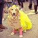 Halloween Dog Parade 2012 - Tompkins Square Park, East Village, New York City - Big Bird Dog Costume - Will Work for Treats