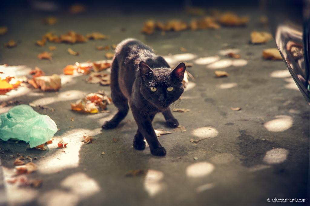Black Cat Attack Tour