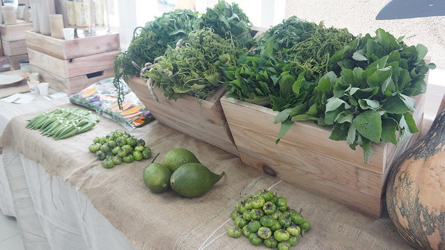 光復鄉邦查農場的阿美族特色野菜。圖片來源:花蓮農改場
