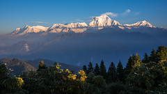 Annapurna range from the path between Gorephani and Tadapani #1