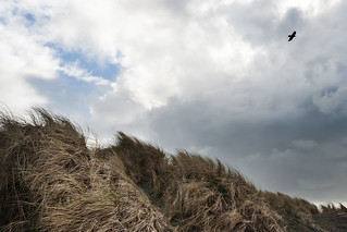 Sea Grass, Sky and Bird | by Jane Waterbury
