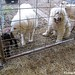 Daisy and Marta outside the sheep barn during lambing season March 2012