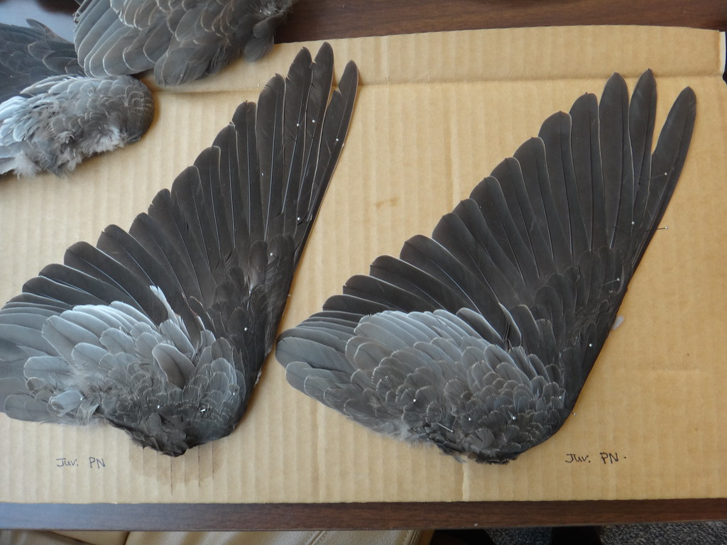 Image Result For A Wing And