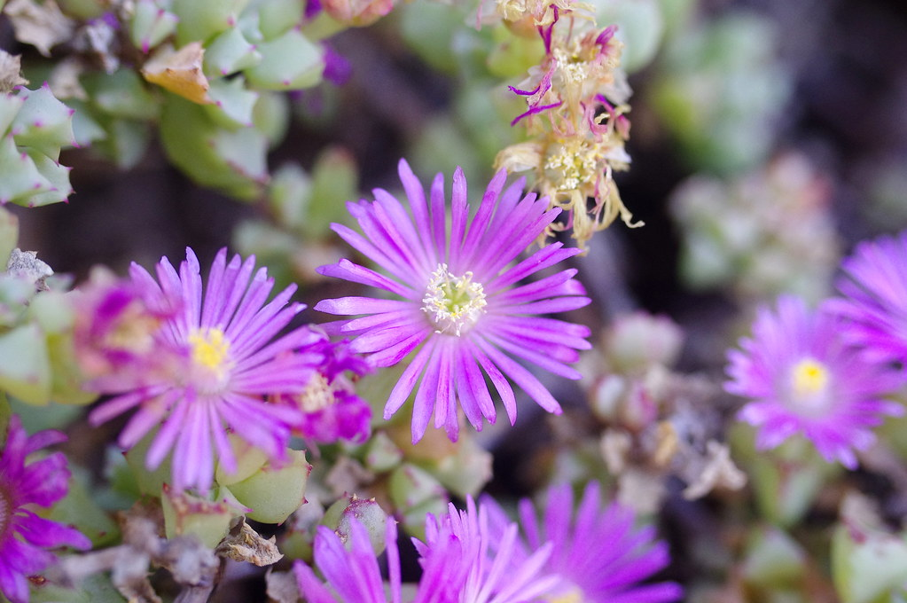 small purple flowers  the same purple flowers that were wit…  flickr, Beautiful flower