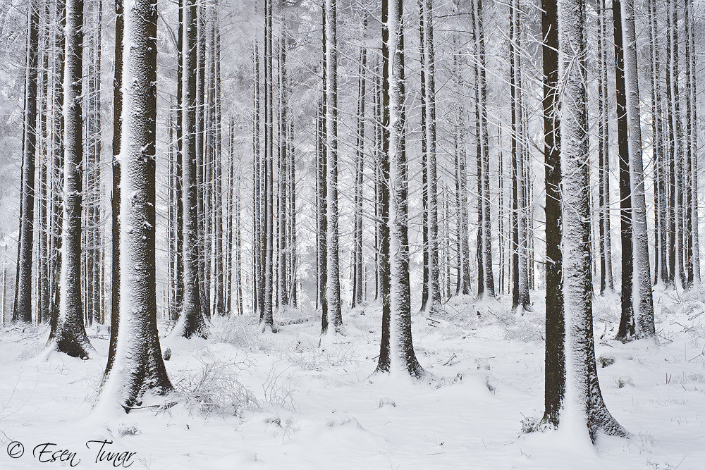 White Forest I Made Quite A Few Visits Up The Quantocks