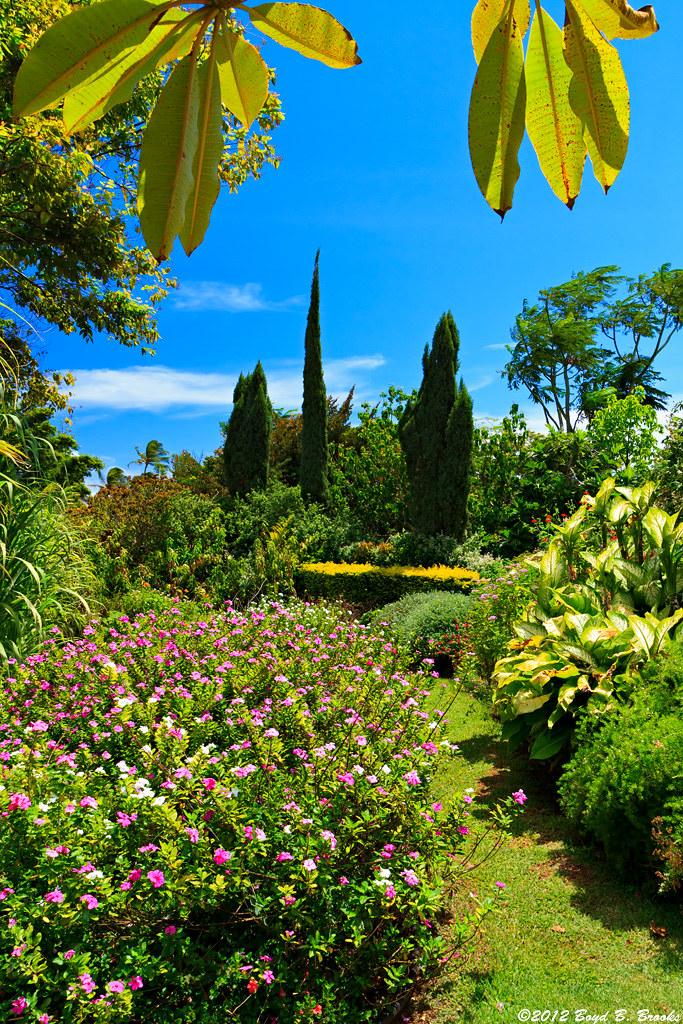 Mcbryde national tropical botanical garden this is from - National tropical botanical garden ...