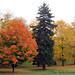 fall trees - near Dobbs Ferry, NY
