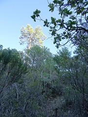 La remontée vers le col rocheux avec le grand pin