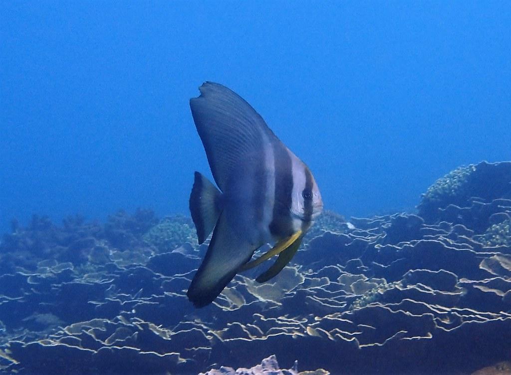 東嶼坪東側圓眼燕幼魚。攝影:蕭伊真