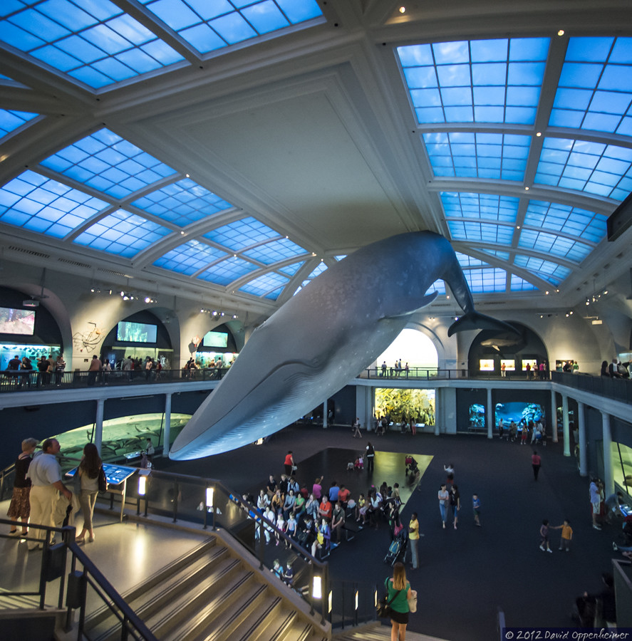 The Blue Whale At The Natural History Museum