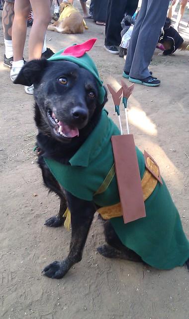 S Tv Show With Dog Dressed Like Robin Hood