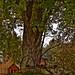 Treasure Under the Old Tree
