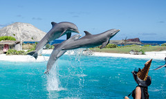 A day at Sealanya Dolphinpark Seapark - Things to do in Antalya
