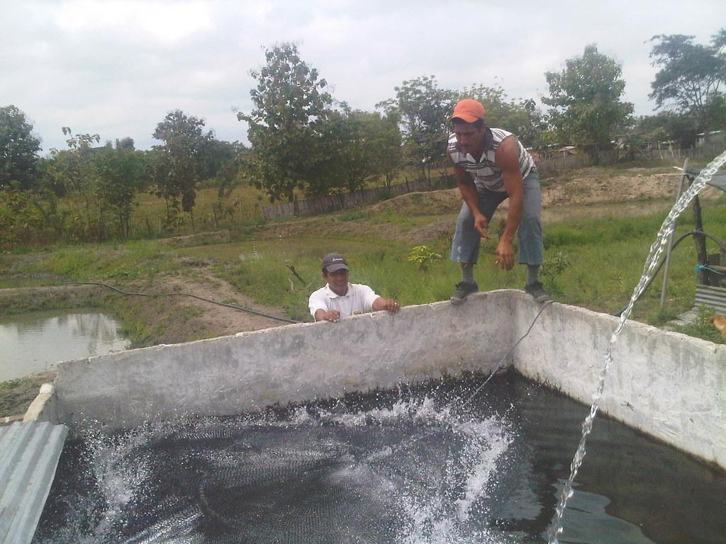 Existen diversos tipos tipos de piscinas o estanques los for Tipos de estanques