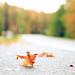 Fall_Foliage_0956