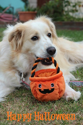 Happy Halloween from Cidney the Girl Dog | by Food Librarian