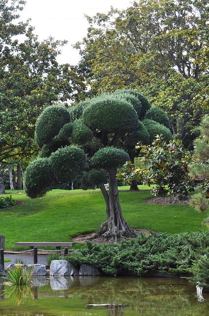 Japanese friendship garden san jose flickr photo sharing for Japanese friendship garden