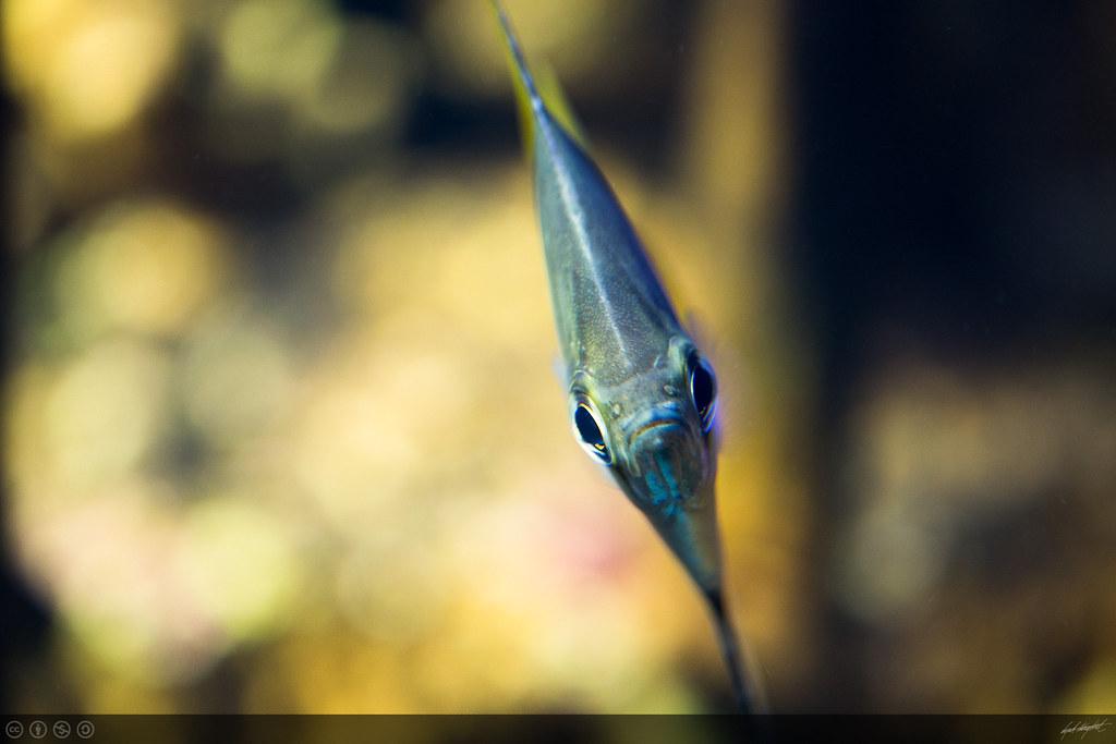 mono argentus vegard haugland flickr