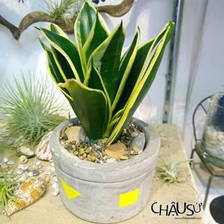 chausu24h.com | chau art | chau su | chau my nghe
