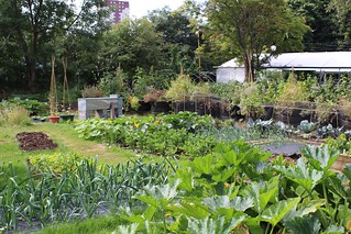 Permaculture Vegetable Garden | by Local Food Initiative