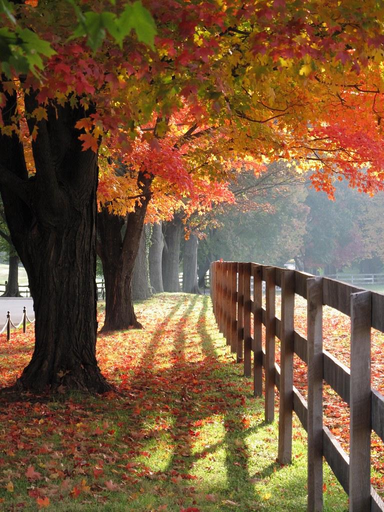 Garrison Forest ~ magical maples | Explore 10/19/2012 I'm ...