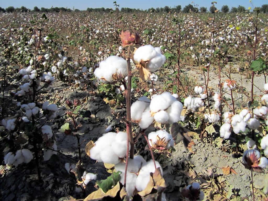E White Cotton Half Apron Kitchen Party Favors Two Pocket