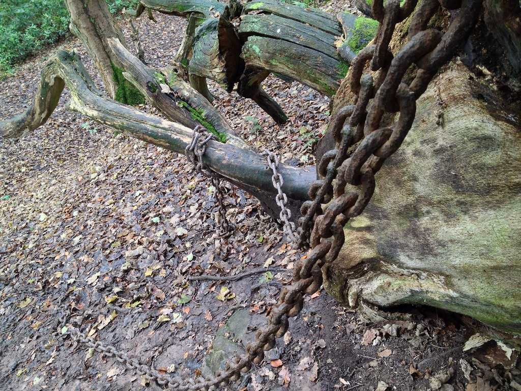 The Legend of Oak in Chains
