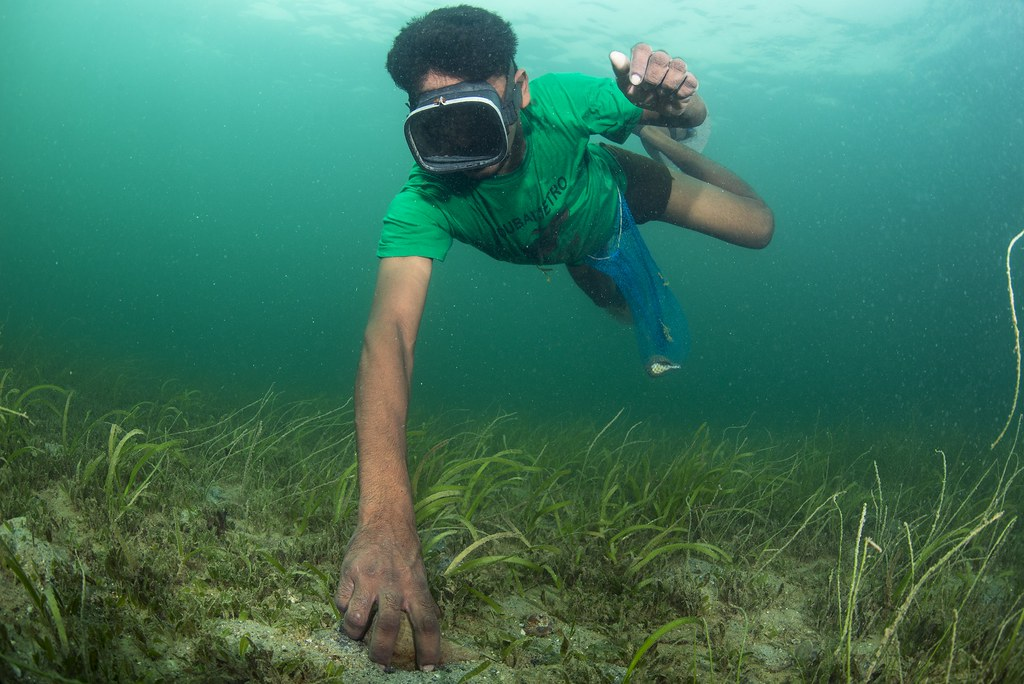 A fisher picks a chank from the sea floor. Image by Umeed Mistry