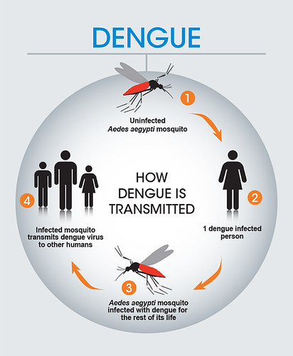 How dengue is transmitted | by Sanofi Pasteur