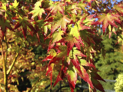 Acer | by James's GW Blog