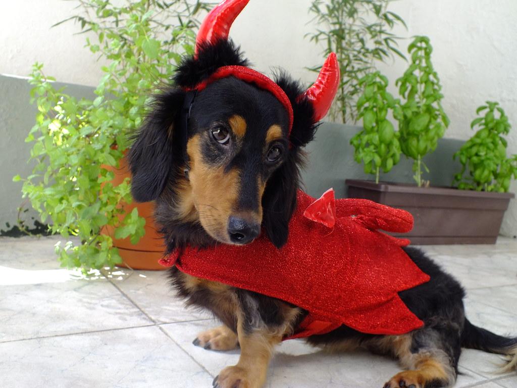 dachshund devil 3 | guadalupe rivera | flickr