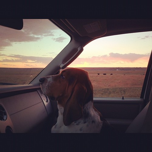 Just takin' a drive and enjoyin' the sunset. | by Ree Drummond / The Pioneer Woman