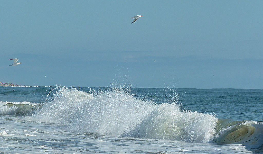 Wave And Seagulls Scene In Ocean City Maryland The