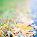 Fall_Foliage_0957
